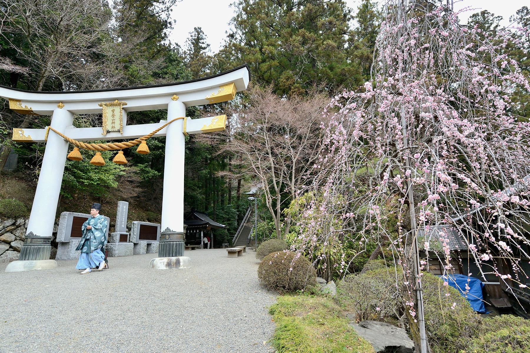 梅百花園 長瀞 宝登山