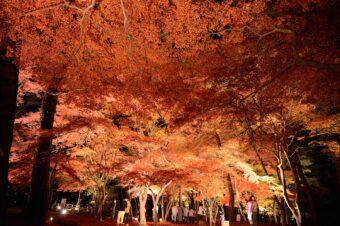 長瀞町の紅葉