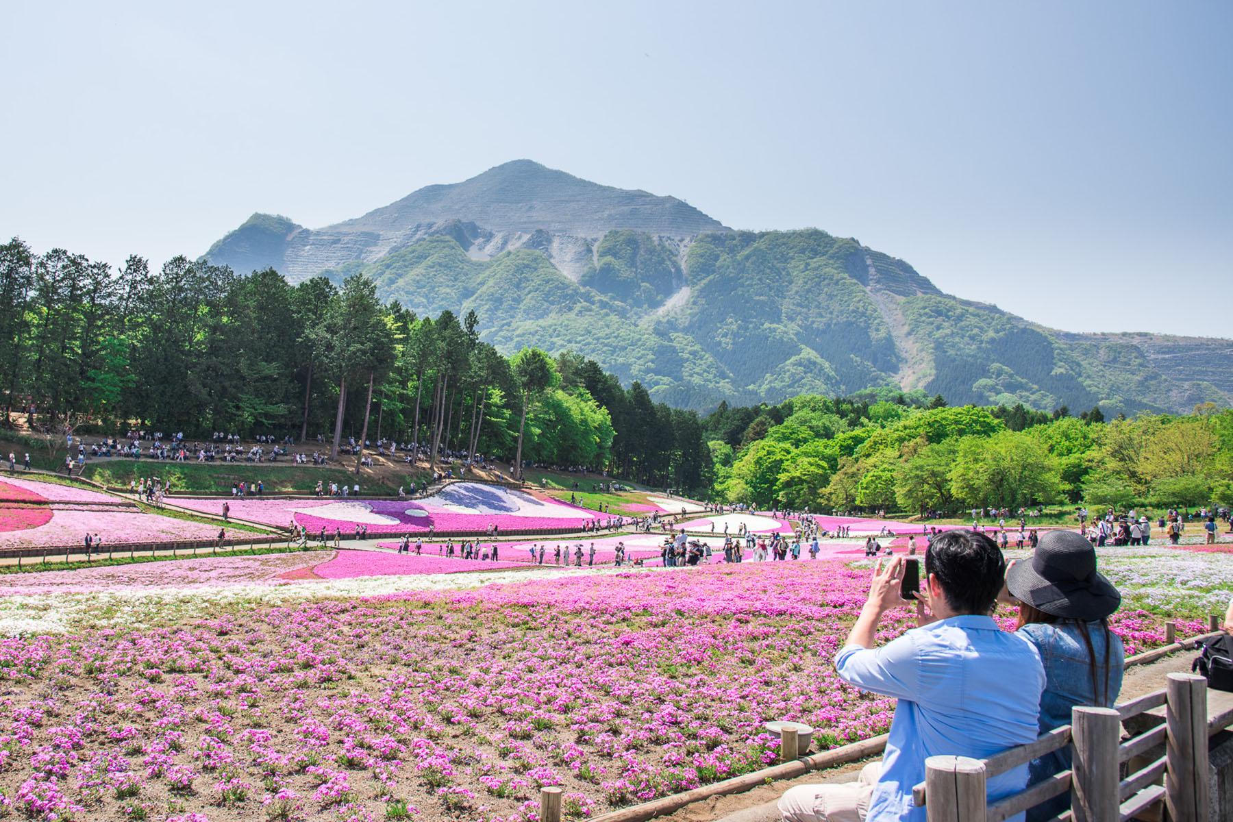 芝桜まつり 秩父市羊山公園「芝桜の丘」
