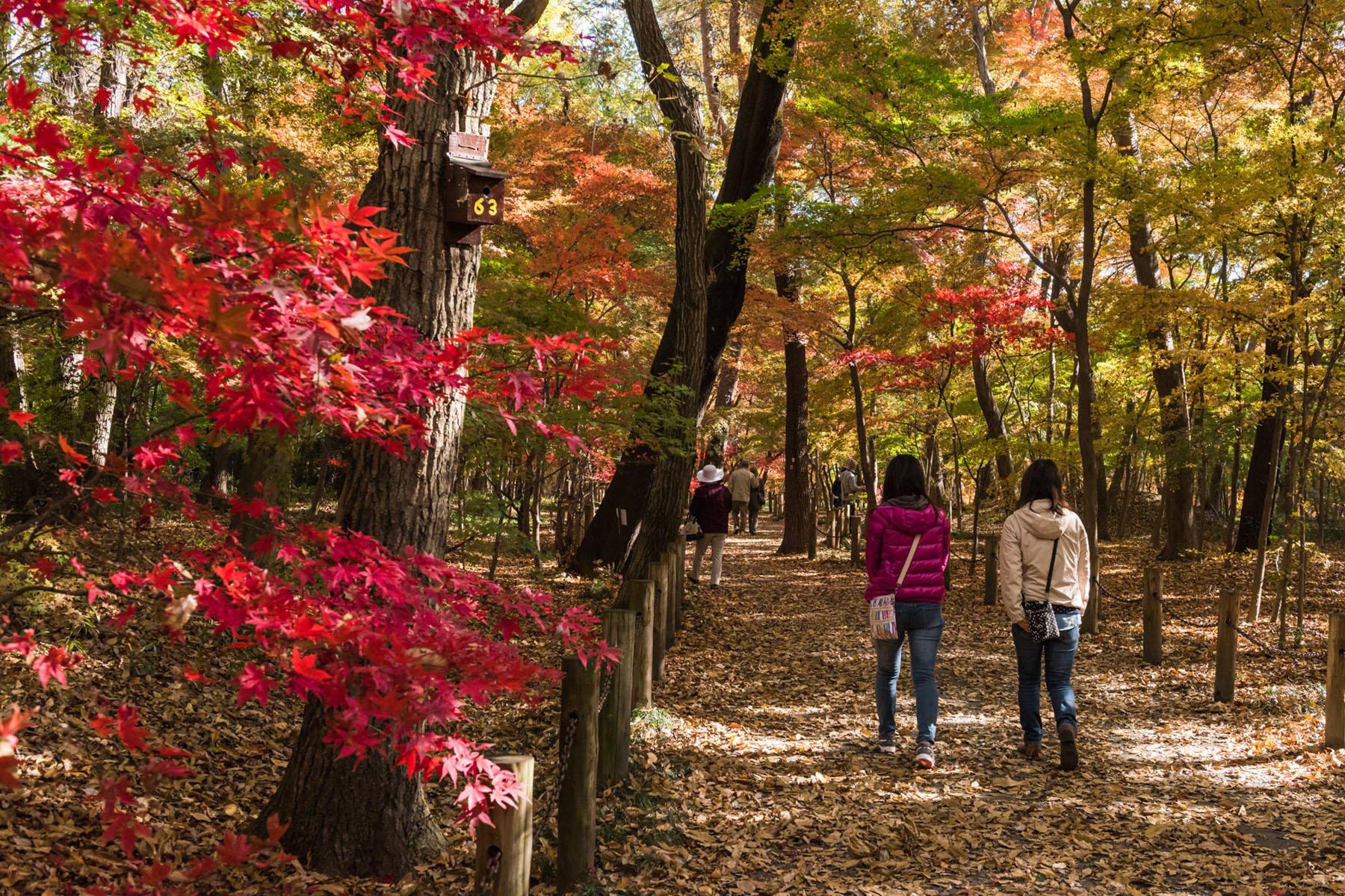 平林寺の紅葉 平林寺境内林