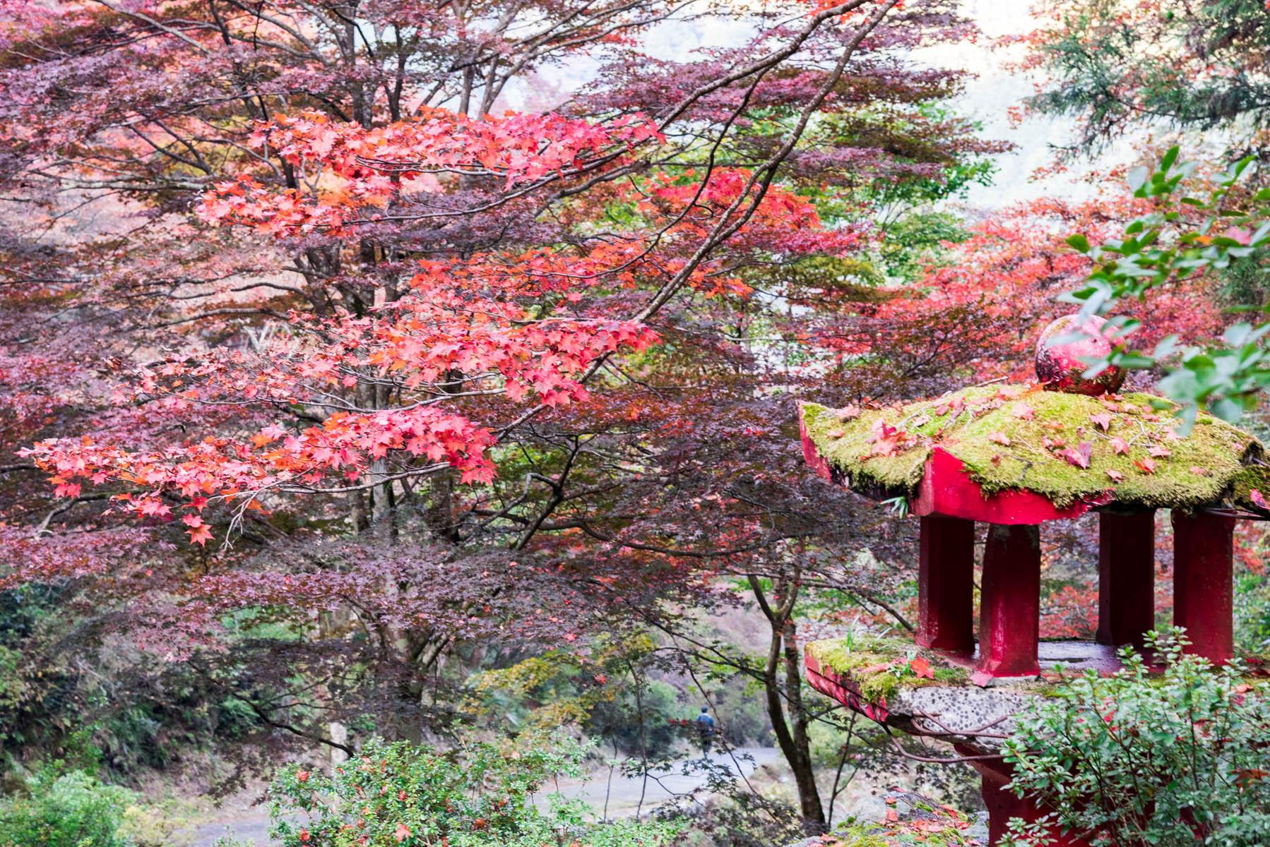 なぐり紅葉まつり 白雲山 鳥居観音