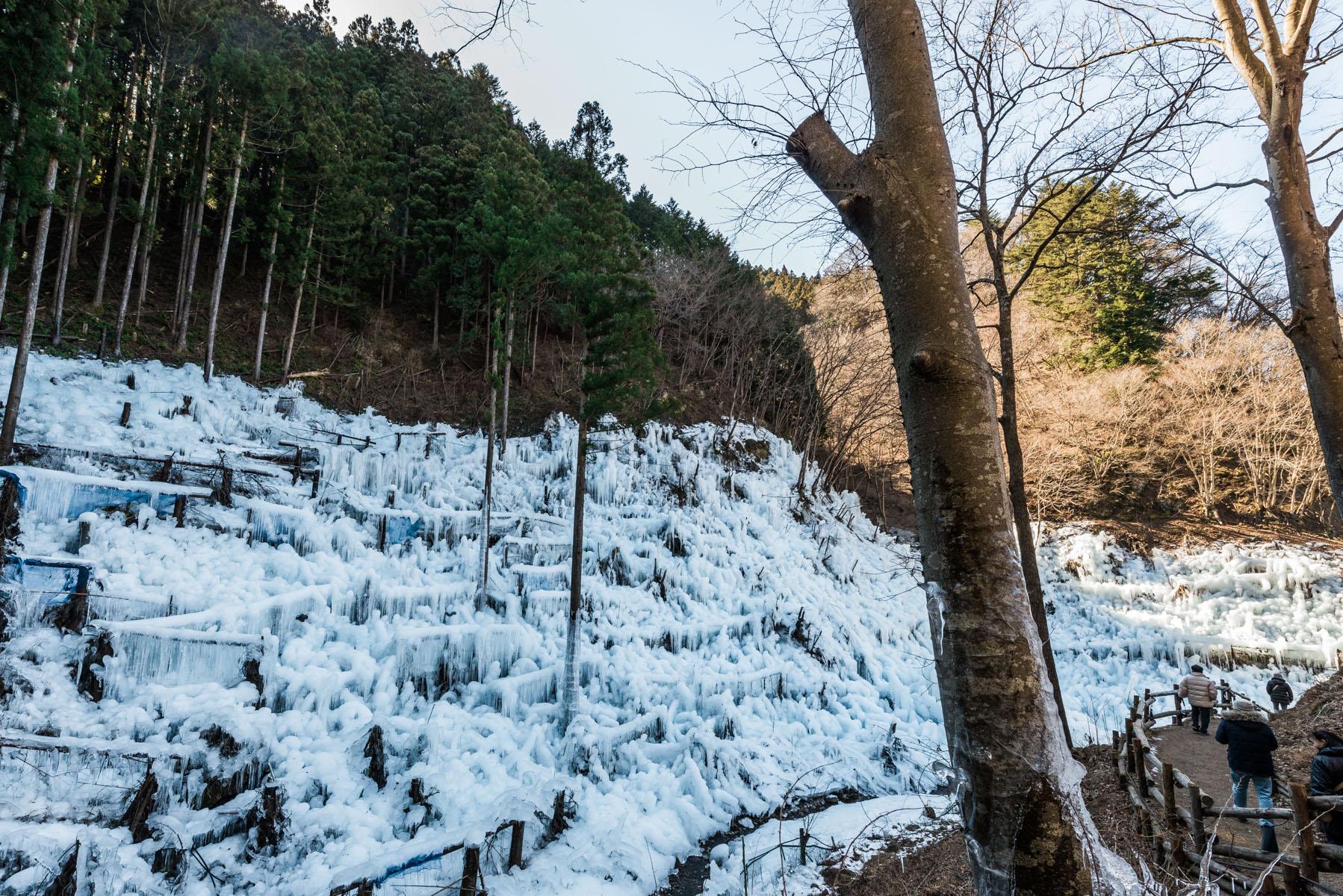 あしがくぼの氷柱 西武秩父線 芦ヶ久保駅付近
