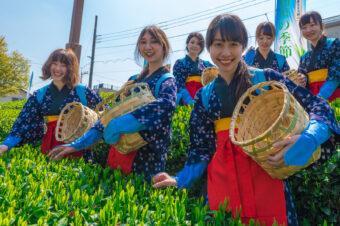 狭山新茶と花いっぱいまつり