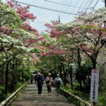 ハナミズキ(花水木) 埼玉県営大宮公園