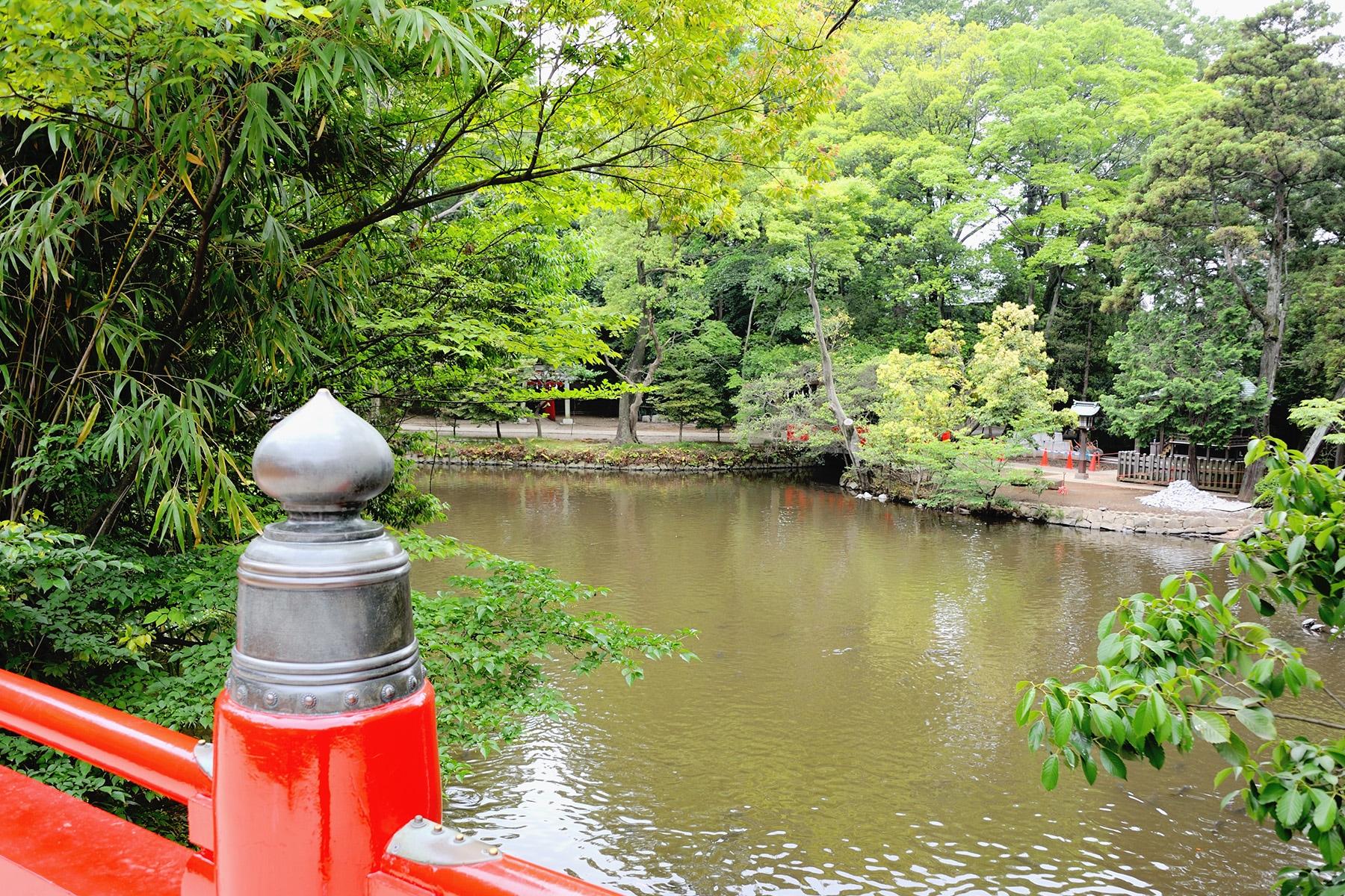 大宮氷川神社の新緑