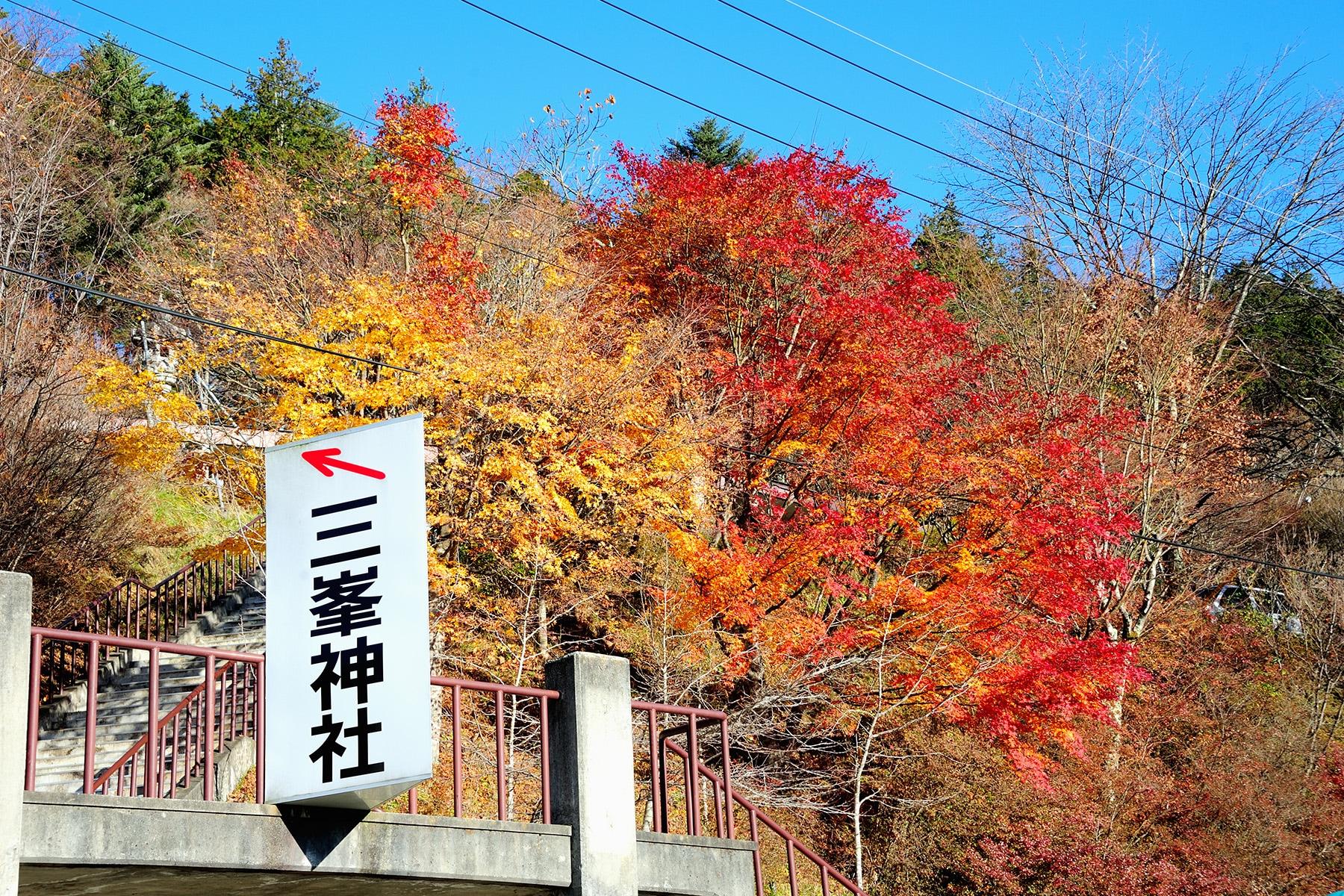 モミジ(紅葉) 秩父三峯神社