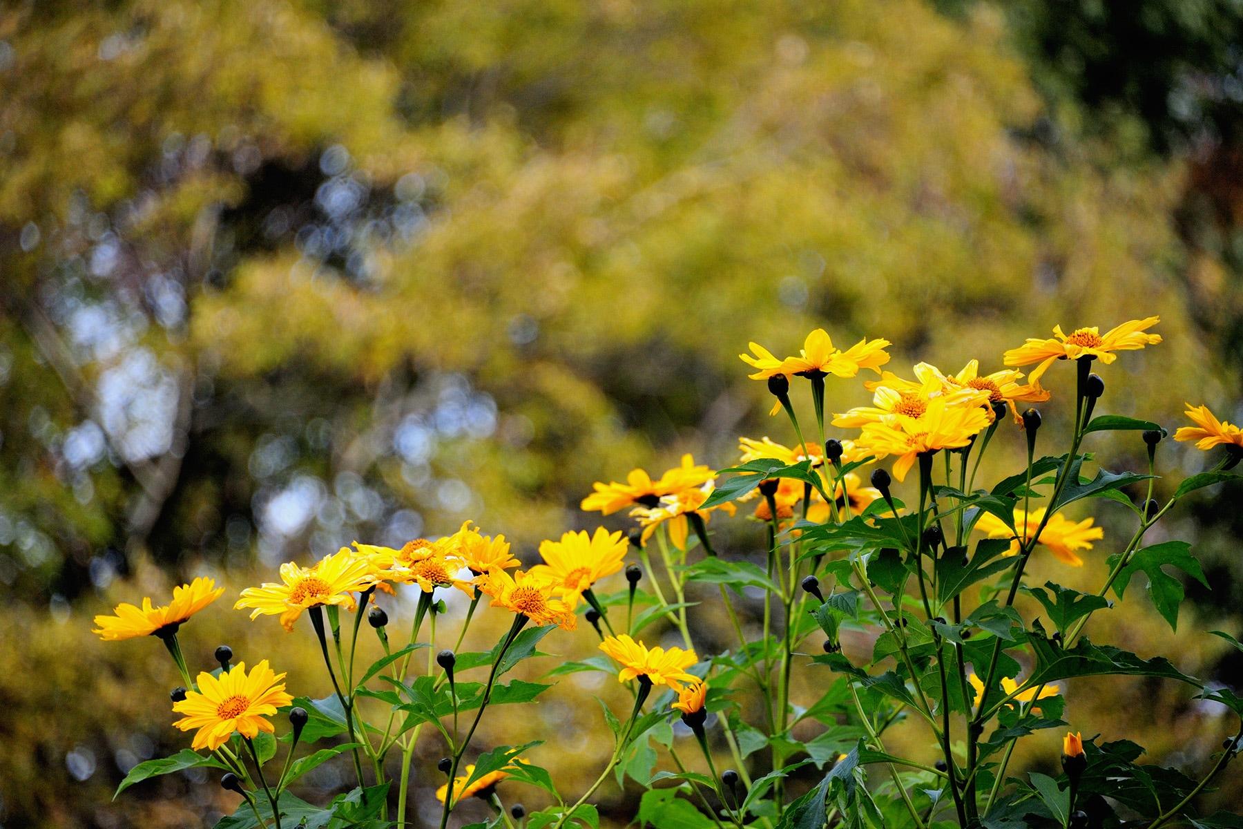 季節の花々 川口グリーンセンター