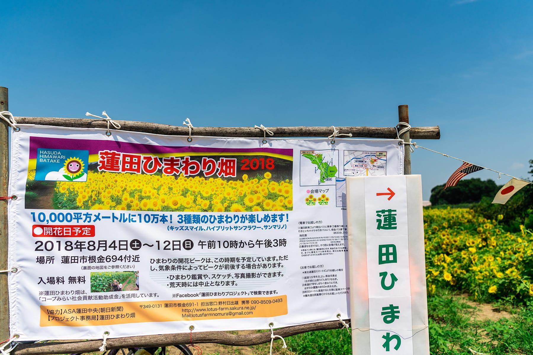 蓮田ひまわり畑:埼玉県蓮田市