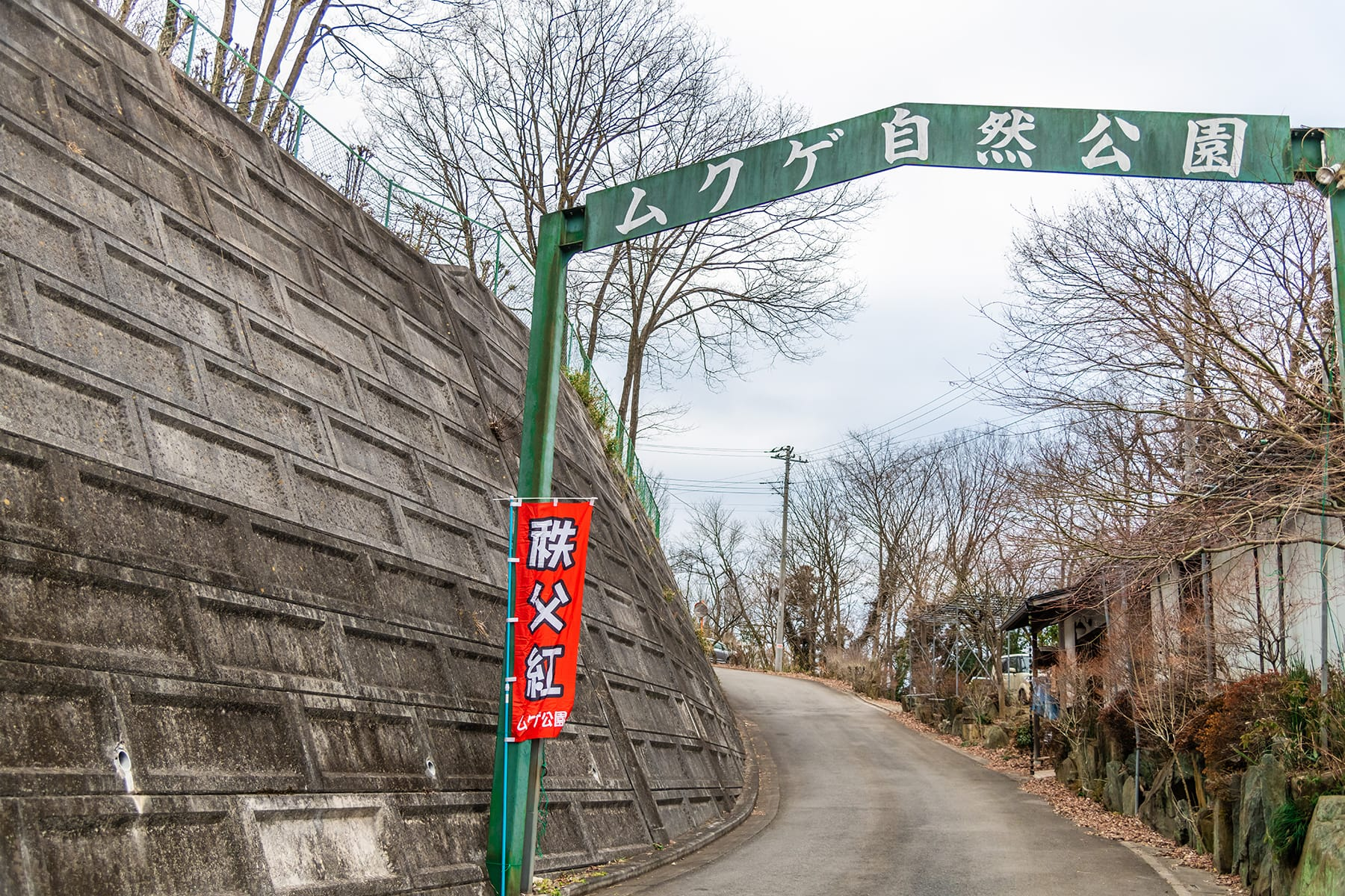 福寿草(秩父紅)【ムクゲ自然公園|皆野町】