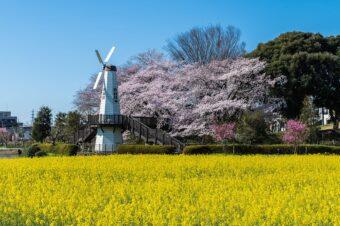 見沼田んぼの桜回廊