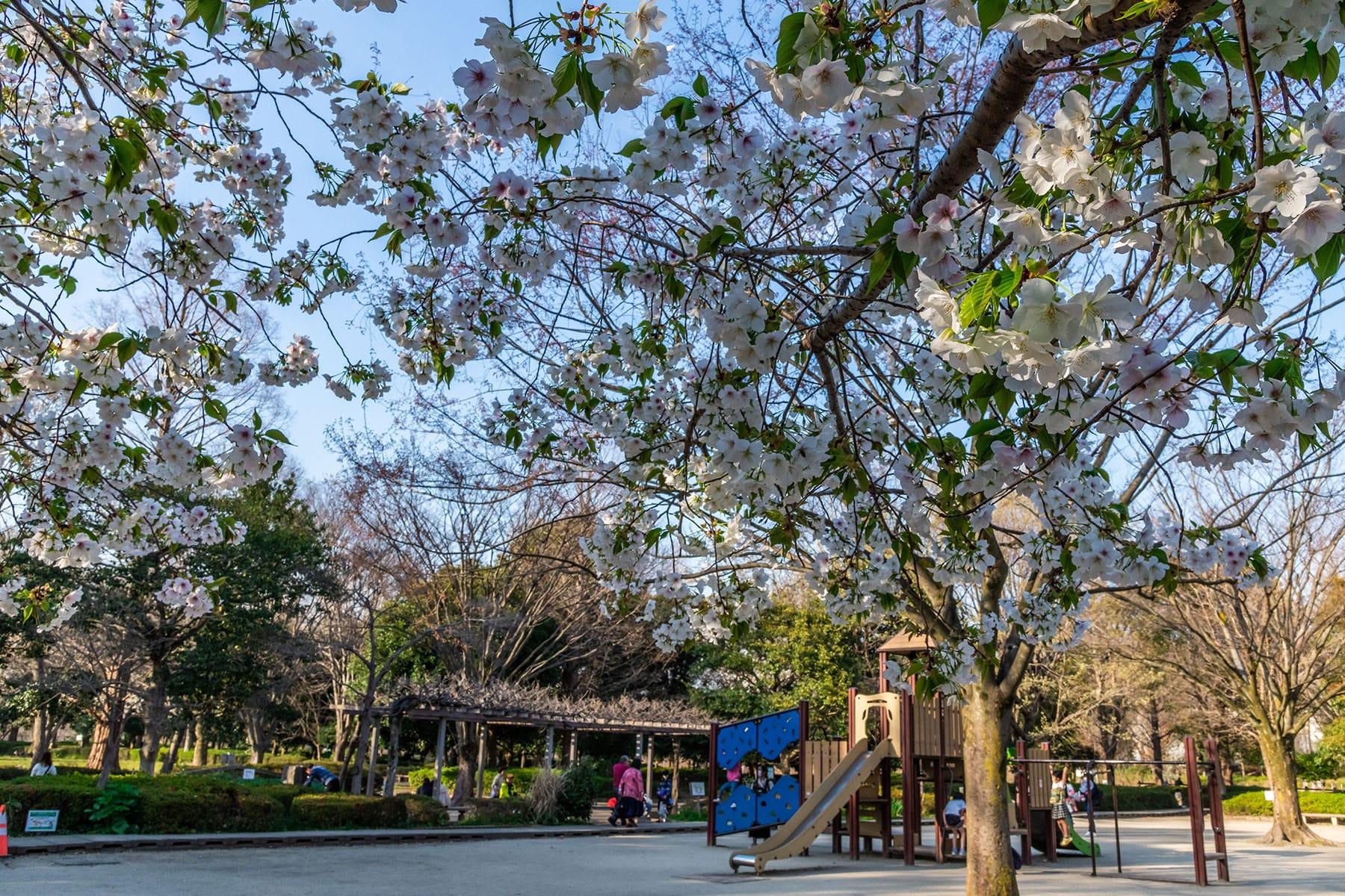 見沼田んぼの桜回廊【見沼田んぼ(全域)|埼玉県さいたま市】 | フォトさいたま